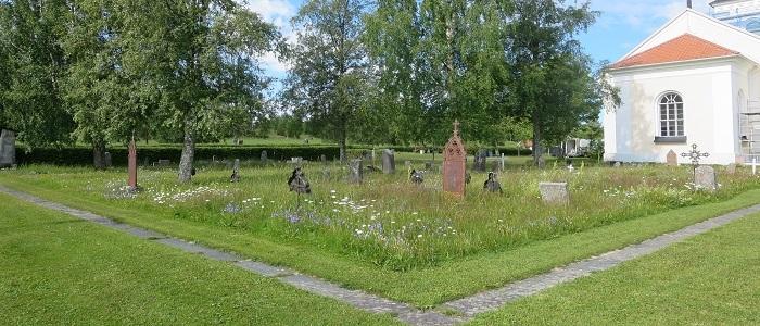 Kyrkogårdarnas-gräsytor