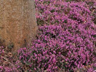 Vårvinterns blommande växter del 1
