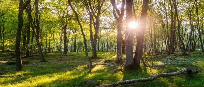 Skog & Natur Kurs
